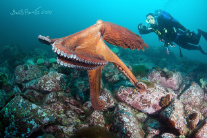 Levitation